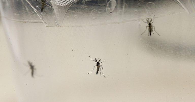 Rio Preto confirma primeira morte por dengue em 2021 - Divulgação