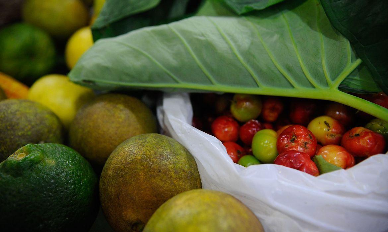 ONU: 931 milhões de toneladas de alimentos foram para o lixo em 2019  - Agência Brasil