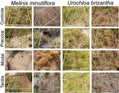 Estudo da Unesp investiga os desafios para a sobrevivência do Cerrado - Divulgação/Governo de São Paulo