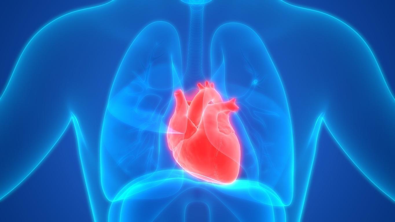 Por que um problema cardíaco pode afetar os pulmões e os rins? -