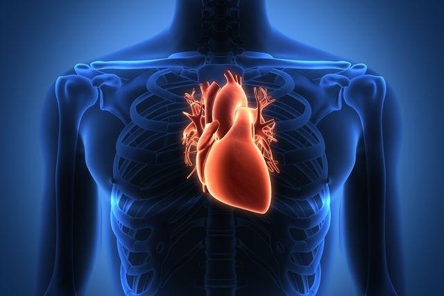 O coração se adapta ao tempo  -
